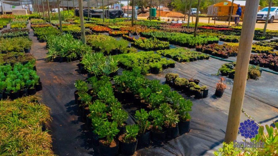 GardenGate Waterwise Nursery - Indigenous Shrubs - Landscaping Waterwise Shrubs - Garden Plants - Vetplante Kwekery JHB