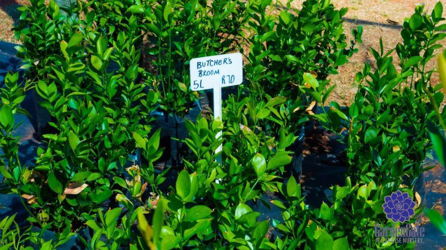 GardenGate Waterwise Nursery - Indigenous Shrubs - Landscaping Waterwise Shrubs - Garden Plants - Vetplante Kwekery JHB