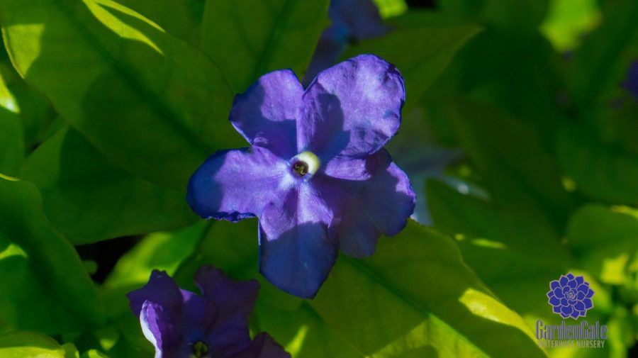GardenGate Waterwise Nursery - Indigenous Shrubs - Landscaping Perennials - Garden Plants - Vetplante Kwekery JHB