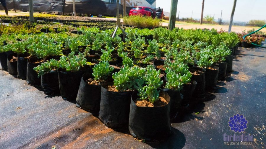 GardenGate Waterwise Nursery - Succulent Plants - Vetplante Kwekery JHB